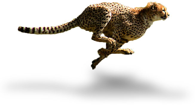Cheetahs are pretty fast, and so to is our delivery to you. We pride ourselves on not only supplying you with the ultimate in safari clothing and accessories, but also ensuring that receiving your order happens in double quick time. We have partnered with the leaders in parcel delivery in order to do so.